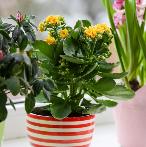 Our Potted Plants Gift Ideas for Mom & Dad